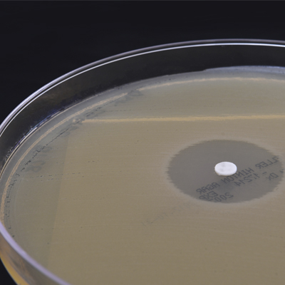 susceptibility disk